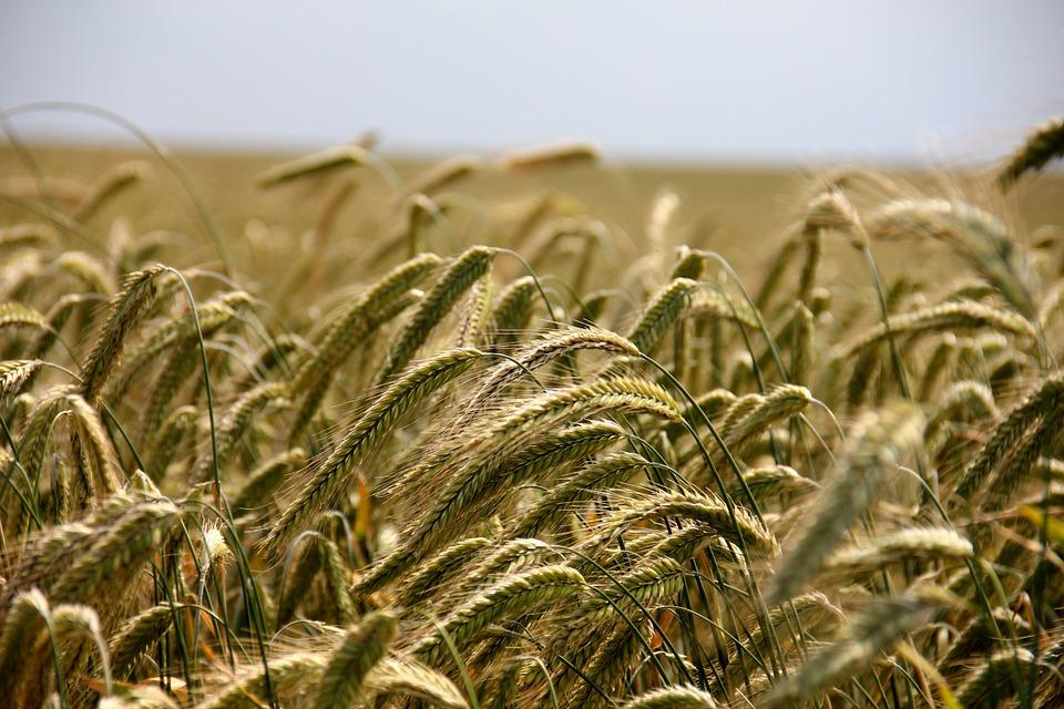 España, el país de la UE con mayor superficie agrícola ecológica
