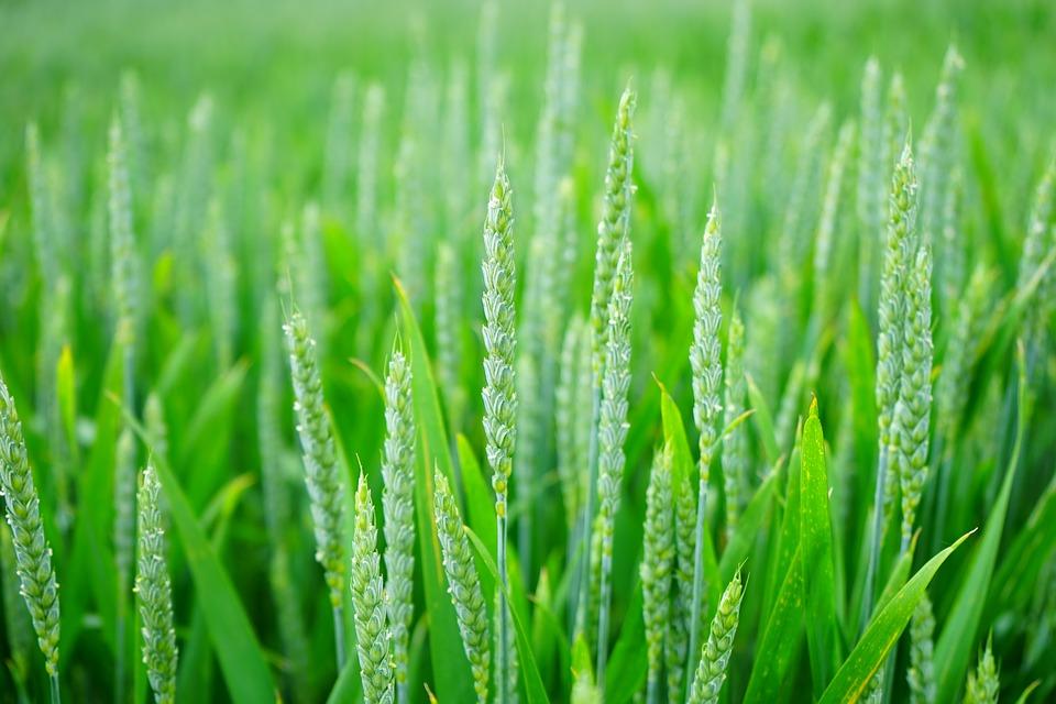 Consumir productos ecológicos podría reducir el riesgo de cáncer