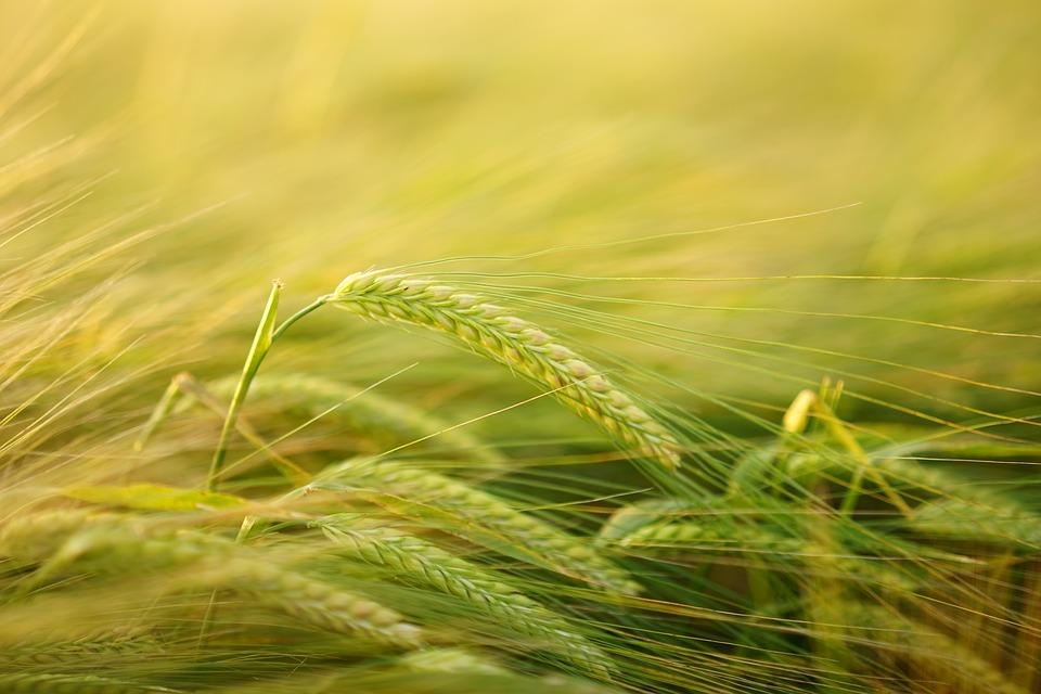 El sector ecológico, en pleno auge
