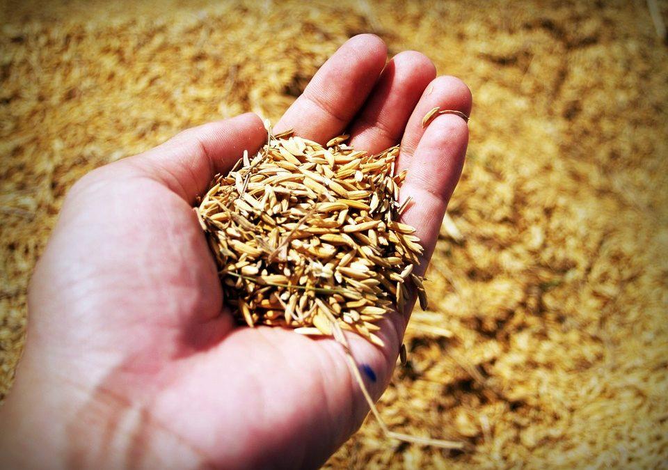 Los 10 principios básicos de la agricultura ecológica