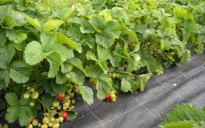 Alimentación ecológica: nueva feria en IFEMA