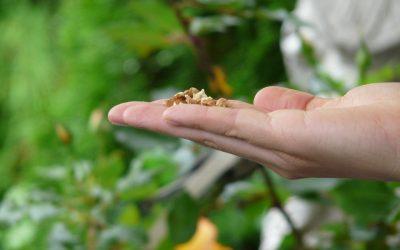 ¿Quién acredita la certificación ecológica?