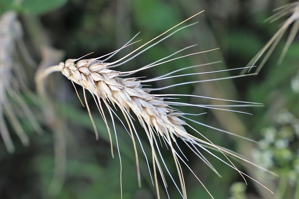 Agricultura ecológica: ¿qué dice la ciencia?