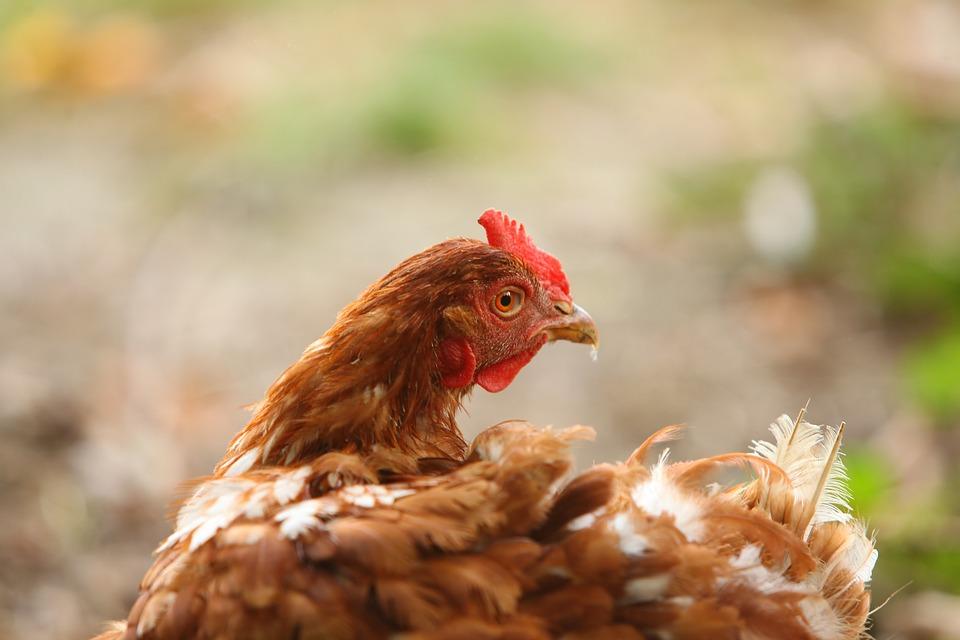 Piensos ecológicos para animales
