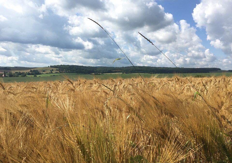 La rentabilidad de la agricultura ecológica