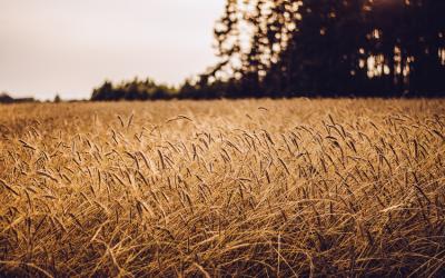 Agricultura ecológica para mitigar el cambio climático