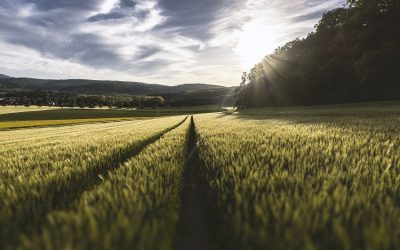 Cambio climático y agricultura ecológica
