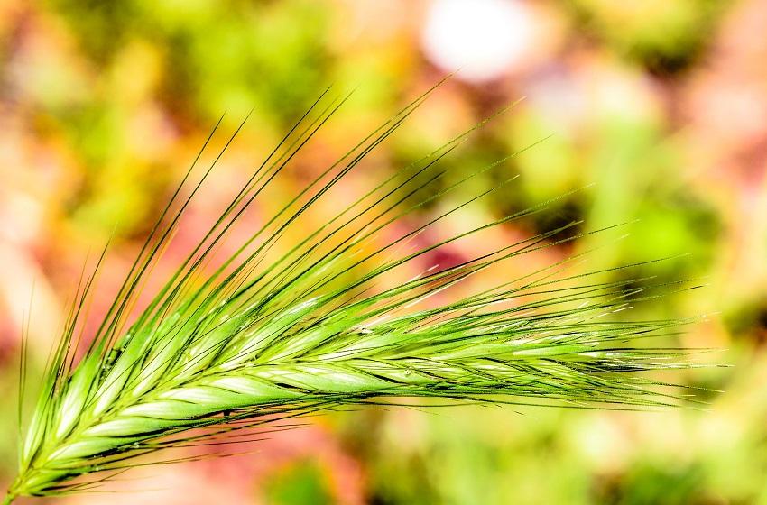 España, primer puesto a nivel europeo en superficie dedicada a la agricultura ecológica