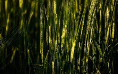 Futuros cambios en la agricultura ecológica