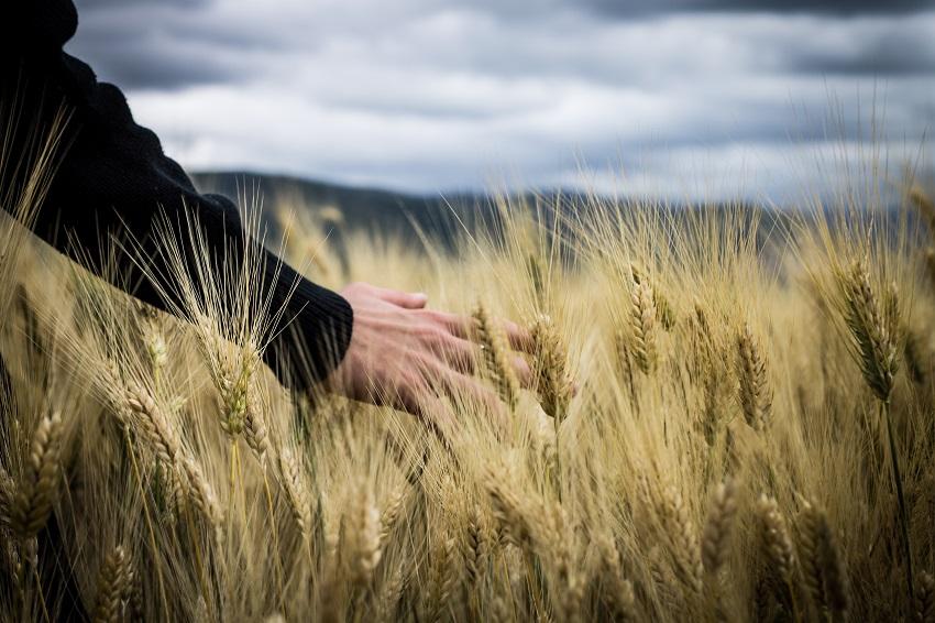 Apostar por la agricultura ecológica, la agricultura del futuro