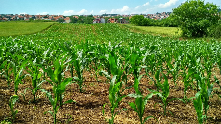 Agricultura eco durante la pandemia