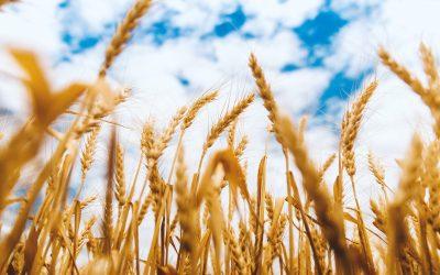 Celebramos el Día Mundial del Cereal 2021