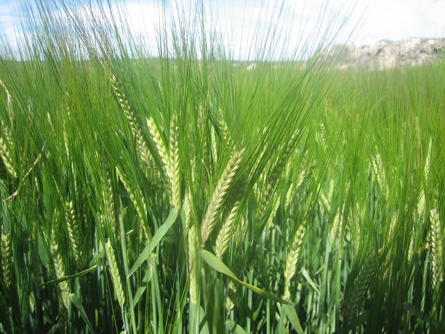 Agricultura ecológica en Castilla La Mancha