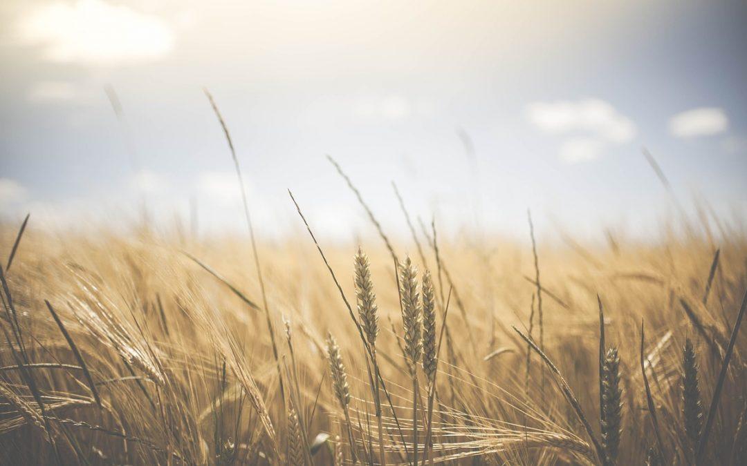 ¿Por qué utilizar semillas certificadas?